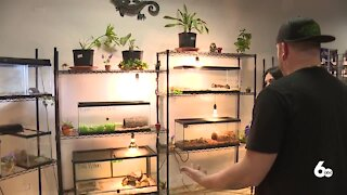 Reptiles looking for forever homes at Idaho Reptile Zoo