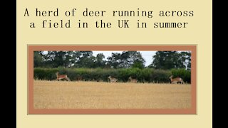 A herd of deer running - does with fawns