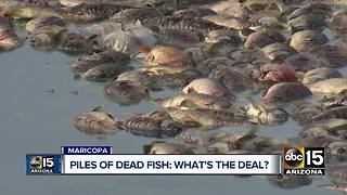 Thousands of dead fish found in Maricopa community ponds