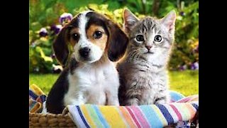 friendly between cat and dog