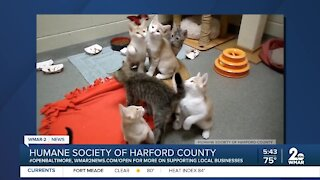 Kittens up for adoption at the Humane Society of Harford County