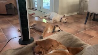 """Sleeping dogs sprint outside when the word """"squirrel"""" is whispered"""