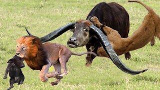 Wild Animal Attacks ! Stunning Wild Animals Attacks !astounding video channel