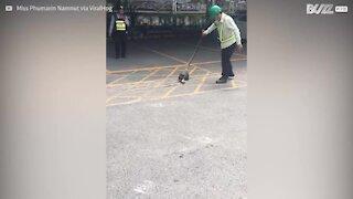 Uomo salva gattino dalle grinfie di un serpente gigante!