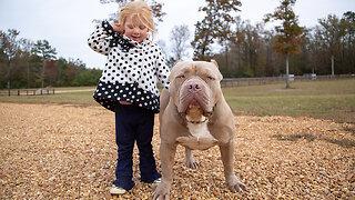 Buster & Chop - The 120lb Pitbulls With $15k Pups