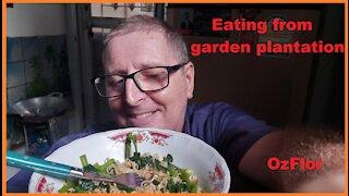 Eating from garden plantation