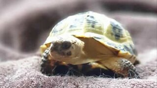 Did you know tortoises could climb?
