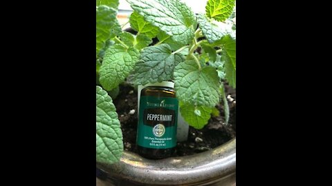 Peppermint Helps With Your Appetite