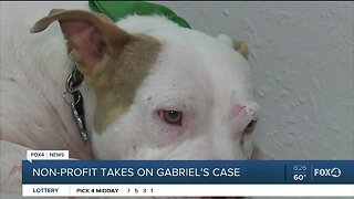 Non-profit joins in fight for justice for abused dog