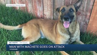 Oceanside police dog recovering from machete attack