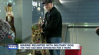 Marine reunited with Military Working Dog after 3 years apart