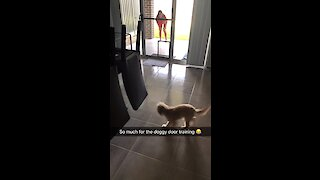 Puppy runs into glass instead of doggy door