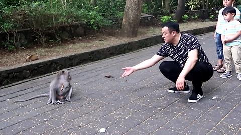 take glasses from monkey easy