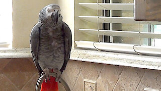 """Talking parrot will let you know that """"you're all wet"""""""