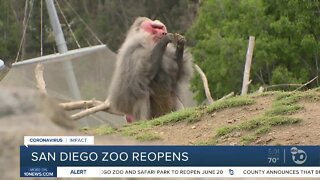San Diego Zoo Reopens with Modifications
