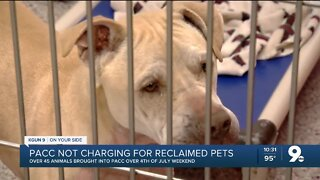 PACC takes in nearly 45 pets following holiday weekend