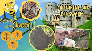 🐝🐝2nd swarm Capturing another Queen and Swarm🐝🐝
