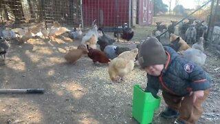 Little farm boy loves feeding all the birds