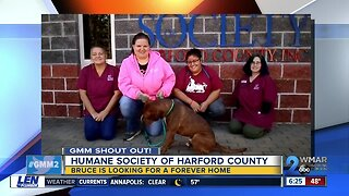 Good morning to the Humane Society of Harford County & Bruce!
