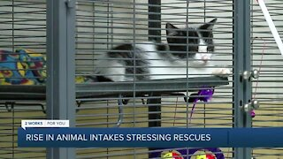 Shelters, rescues stressed with rise in animal intakes & owner-surrenders
