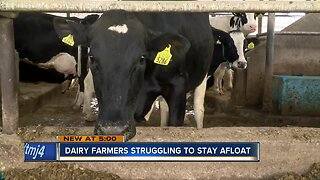 Dairy farmers struggle to stay afloat in Wisconsin