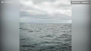 Baleia realiza salto espetacular no Canadá