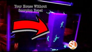Scorpion Repel is a new way of keeping scorpions from entering your home