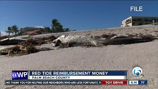 County leaders apply for state funds after red tide