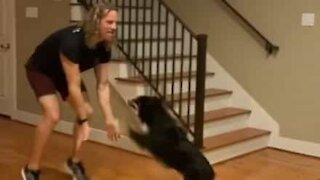 This dog is an amazing dance partner!