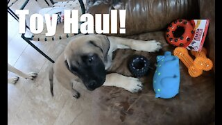 Dog Toy Shopping + Puppy Shots for our English Mastiff Puppy