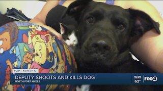 Deputy shoots and kills dog