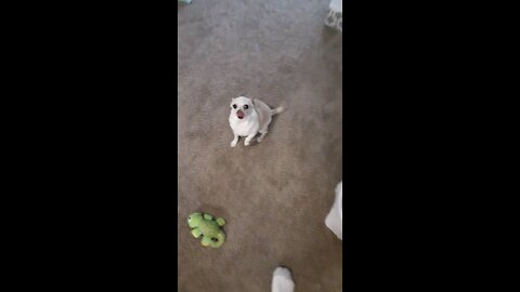 Dogs excited for dinner time