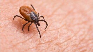 Symptoms Of Chronic Lyme Disease