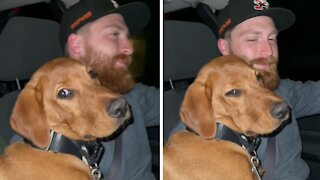 Tired puppy falls asleep on owner's lap during car ride