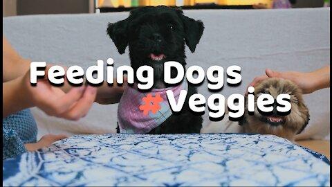 Feeding My Dogs Veggies