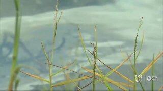 Winter Haven Hospital fuel tank spills into Lake Martha