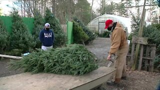 Pandemic creates big demand for locally grown Christmas trees