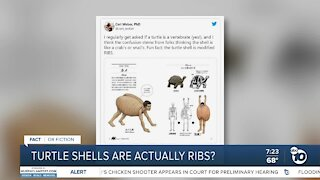 Fact or Fiction: Turtle shells are actually ribs?