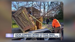 Local company works to save trees from being destroyed by construction