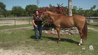Nearly 2 dozen starving horses rescued in Okeechobee County