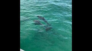 GoPro Hero 8: Key West