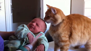 Cats and newborn Babies first meeting and their bond