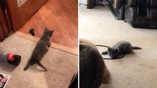 Kitten With Spinal Injury Plays With Friends After Miracle Recovery
