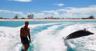 Wakeboarders surfing with dolphins