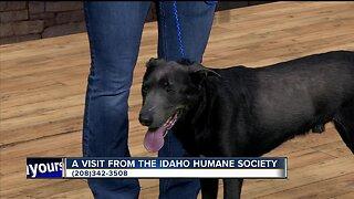 Idaho Humane Society: Ace