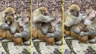 A monkey family really loves each other