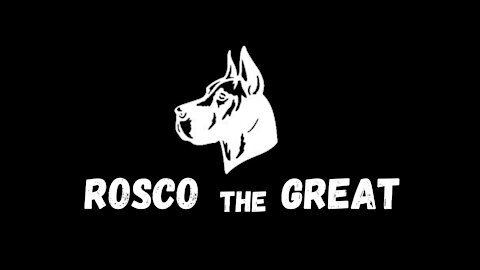 Great Dane (Rosco)