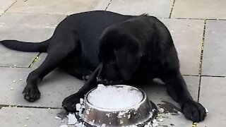 Puppy plays with bowl
