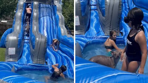 Doggy goes down giant inflatable water slide