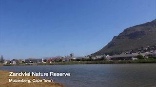 SOUTH AFRICA - Cape Town - Cape Town International Kite Festival (Video) (KMh)